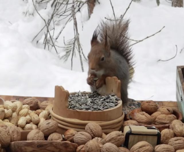 雪山にどんぐりやクルミなどの木の実を沢山置いたら小動物たちのパーリーが始まる