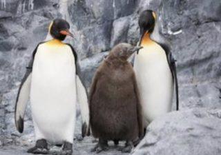 北海道旭山動物園にテイコウペンギン現る!