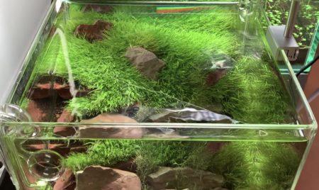 ADAの小型水槽向け新型LEDライト DOOAソルスタンドRGB のレビュー動画